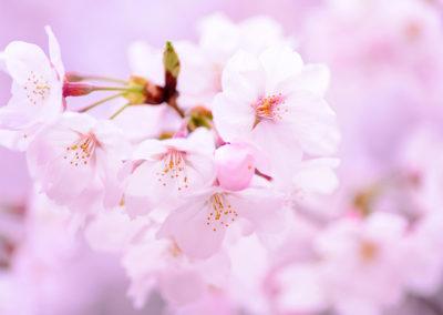 Rebranding Blossoms of Hope